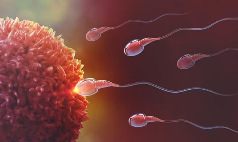 Plemniki docierające do komórki jajowej