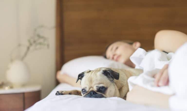 śpiąca kobieta z psem