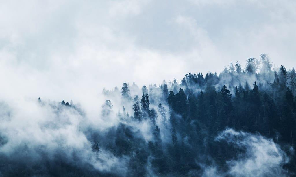 góry las we mgle